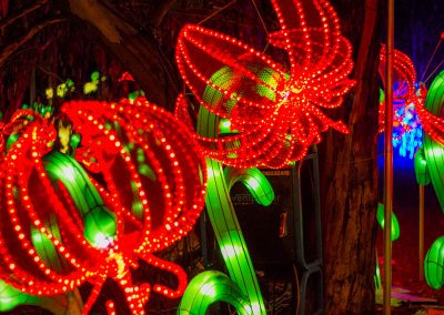 dandenong-light-festival-chinese-silk-lanterns16