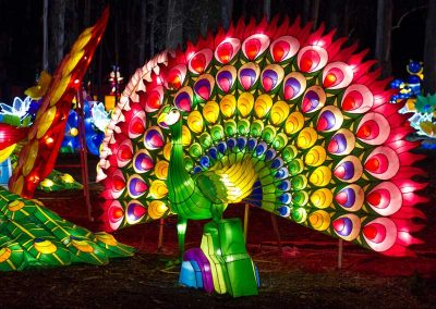dandenong-light-festival-chinese-silk-lanterns8